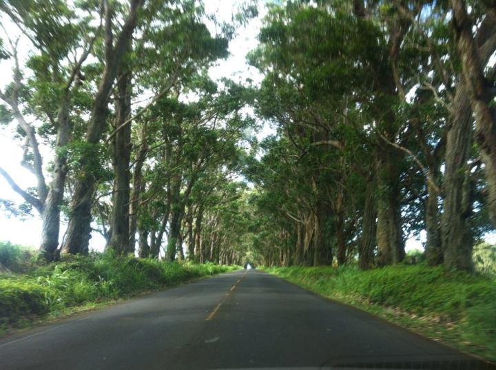 koloa-tree-tunnel